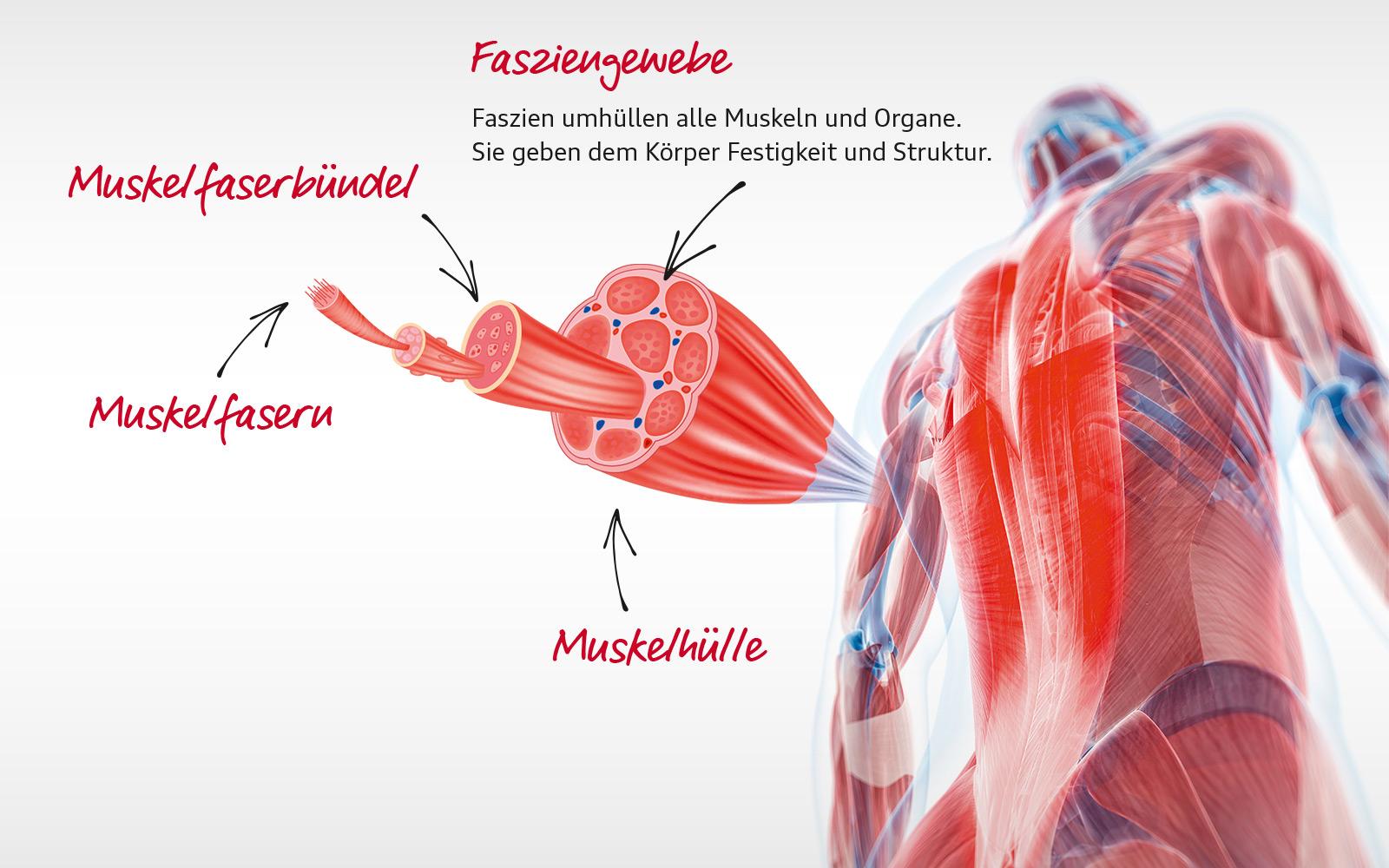 cook&fit - Audi BKK /gesundheit